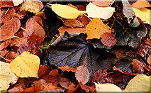 J3996 : Autumn at Gleno 2010-5 by Albert Bridge