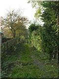 SE2033 : Track - Waterloo Road by Betty Longbottom
