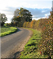 TM2287 : Autumnal hedge beside Lonely Road by Evelyn Simak
