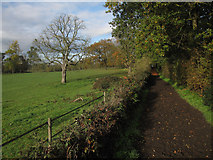 TQ1662 : Bridleway to Claygate by Hugh Venables