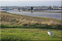 NJ9605 : Aberdeen Harbour by Stephen McKay