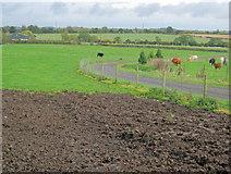 SK6959 : Entrance track to Orchard Wood Farm by Trevor Rickard