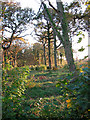 TM3190 : View into Great Wood from Norwich Road by Evelyn Simak