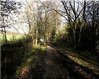 SJ8860 : Whitemore Local Nature Reserve by Jonathan Kington