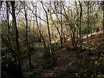 SJ8860 : Birch wood by Jonathan Kington