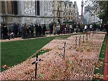 TQ3079 : Field of Remembrance 2010 Westminster Abbey by PAUL FARMER