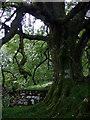 SN1133 : Ruins at Hafod Tydfil (2) by ceridwen