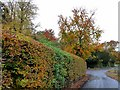 NZ0461 : Hedge in autumn colour by Oliver Dixon