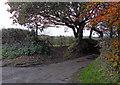 SJ3183 : Tree Entry by J Scott