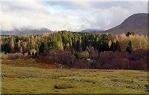 NN3578 : Fersit forest by Scott Eden
