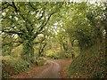 SX5649 : Lane below Wrescombe by Derek Harper