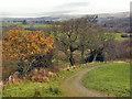 SD7013 : Bridlepath by David Dixon