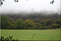TQ5959 : Cooper's Wood in the mist by N Chadwick