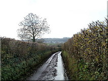 ST1273 : Tree and hedges alongside a country lane NE of Wenvoe by Jaggery