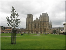 ST5545 : Wells Cathedral Green by David Roberts