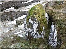 NN7954 : Mossy covered rock by Liz Gray