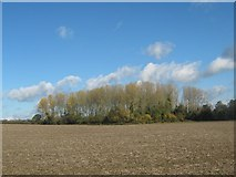 SK2139 : Finny Plantation, Rodsley, Derbyshire by Eamon Curry