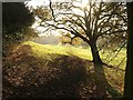 SU9384 : Field and tree, Dorney Wood by Derek Harper