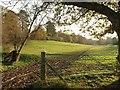 SU9384 : Valley, Dorney Wood by Derek Harper