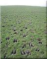 ST5890 : Saltmarsh with hoofmarks, Littleton Warth by Robin Stott