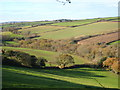 SW6926 : Wooded valley below Trevilgan Farm by Rod Allday