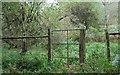 TQ5633 : Deer proof fence, Rocks Wood, Eridge Park by N Chadwick