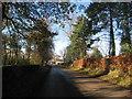 NY3059 : Road into Dykesfield by Jonathan Thacker