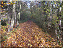 TQ1562 : New Road byway by Hugh Venables