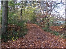 TQ1562 : Bridleway past Limekiln Wood by Hugh Venables