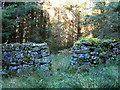 NY6475 : Sheepfold by Spur Rigg - main entrance by Mike Quinn