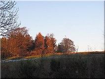 NS3586 : Auchintullich Hill by Richard Webb