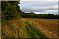 SO5062 : Looking south along the edge of Berrington Hall's parkland by Christopher Hilton