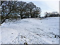 SO5194 : Earthworks at Gretton Manor by Richard Law