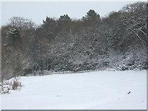 SJ8959 : Snowy meadow  by Jonathan Kington