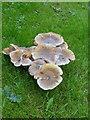 NN9451 : Fungi, Balnaguard by Maigheach-gheal