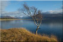 NM9762 : Above Loch Linnhe by Stuart Fiddes