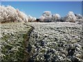 SP2972 : Frost at Cherry Orchard by John Brightley