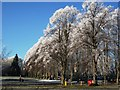 SP2872 : Frost on avenue of trees leading to St. Nicholas Church by John Brightley