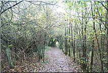 TQ5359 : The North Downs Way to Otford by N Chadwick