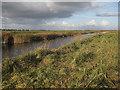 TL4887 : Old Bedford River by Hugh Venables