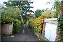 TQ5359 : North Downs Way by N Chadwick