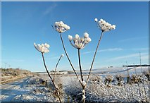 NS3306 : Snowy Seedheads by Mary and Angus Hogg