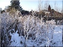 SJ8959 : Frosty Willowherb by Jonathan Kington