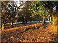 TQ4628 : Early Morning Sun, Ashdown Forest by Simon Carey
