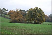 TQ5334 : A bit of autumn colour by N Chadwick