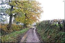 TQ5334 : Muddy lane to Bulfinches Farm by N Chadwick