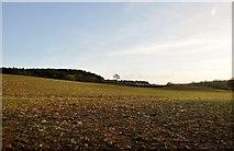 SY0280 : East Devon : Grassy Field by Lewis Clarke