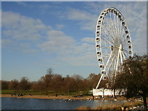 TQ2780 : Giant Observation Wheel beyond the Serpentine, Hyde Park by Peter S