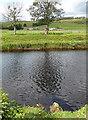 NY7385 : Farmland near Falstone (1) by Stephen Richards