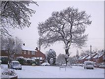 SO9096 : A snowy Buckingham Road in Penn, Wolverhampton by Roger  Kidd